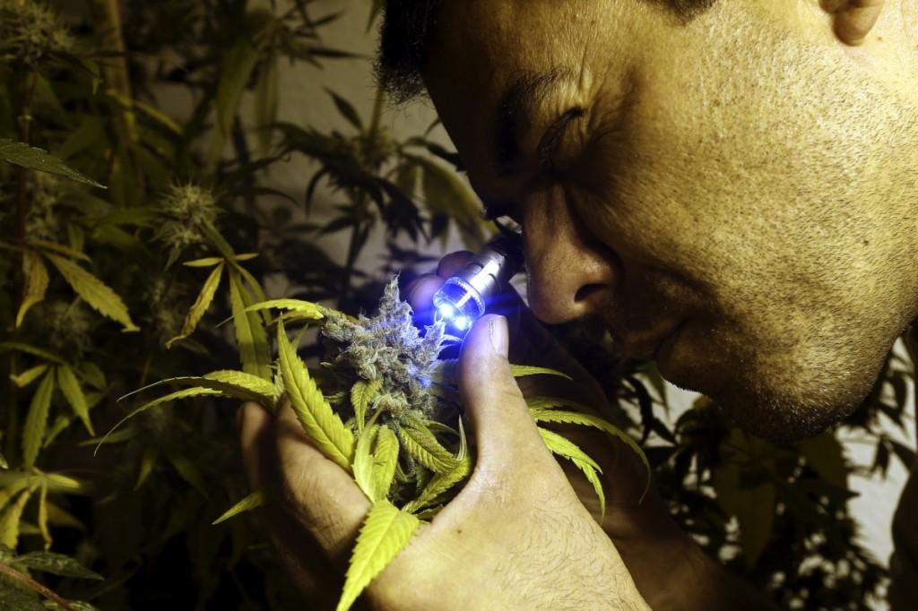 Каста марихуана автоцветы семена конопляные