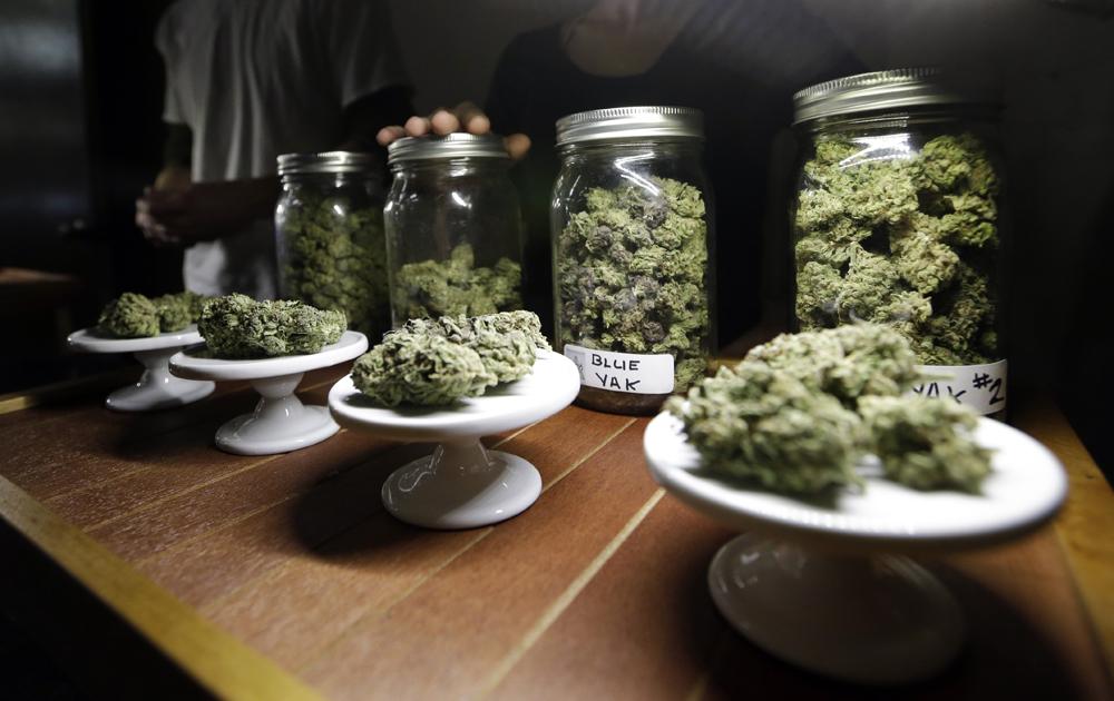 Samples of the drug, marijuana.