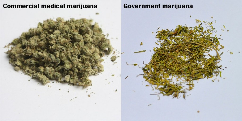 What does medical marijuana look like