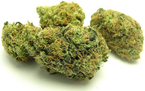 Cannabis10.jpg