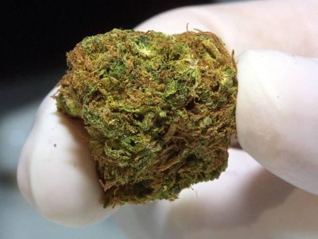 Cannabis_Bud2.jpg