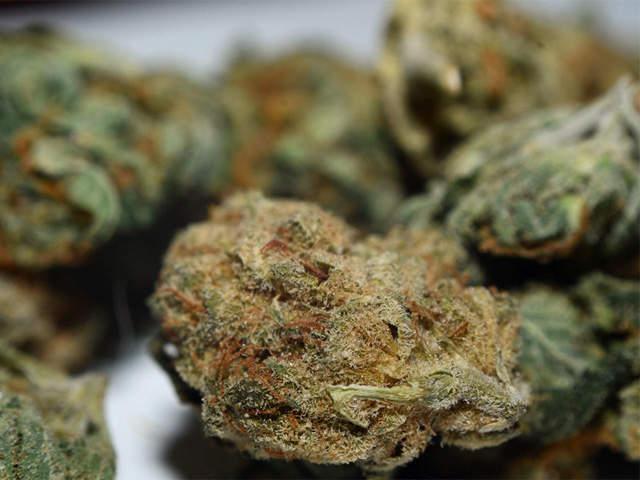 Cannabis_Buds1.JPG