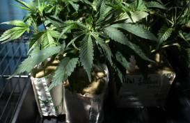 Cannabis_Clones1.jpg