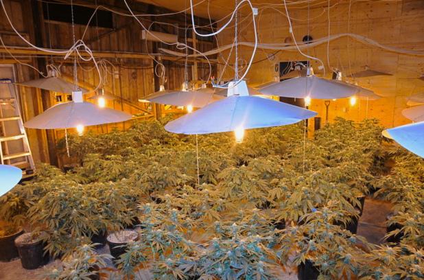 Cannabis_Grow_Op_Indoor.jpg