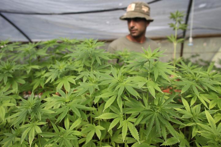 Cannabis_Grow_Site.jpg