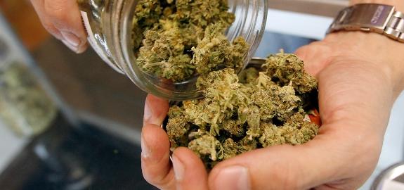 Cannabis_In_Hand.jpg
