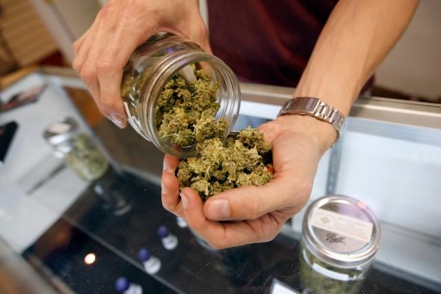 Cannabis_In_Hand1.jpg