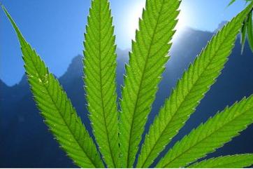 Cannabis_Leaf.png