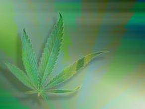 Cannabis_Leaf21.jpg