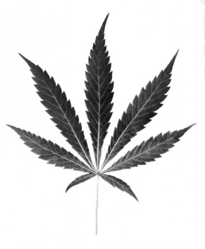 Cannabis_Leaf24.jpg