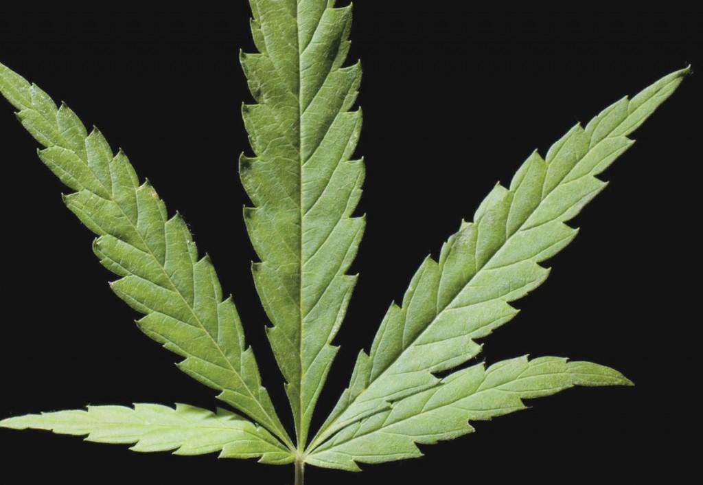 Cannabis_Leaf35.jpg