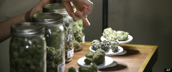 Cannabis_Survey.jpg