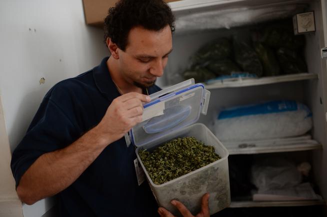 Cannabis_in_Frezzer.jpg