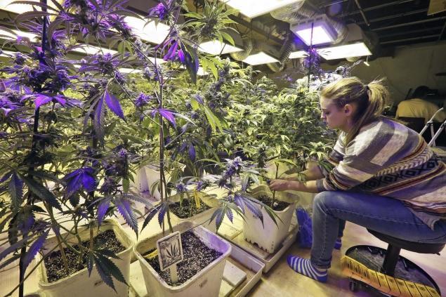 Cheyenne_Fox_Denver_Grow.jpg