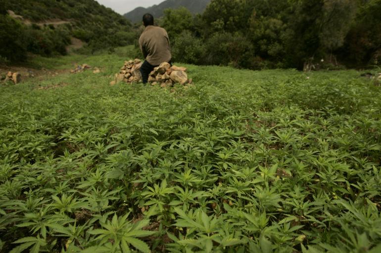 China_Cannabis_Field.jpg