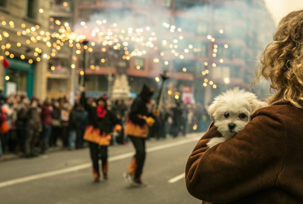 Dog_-_Getty.jpg