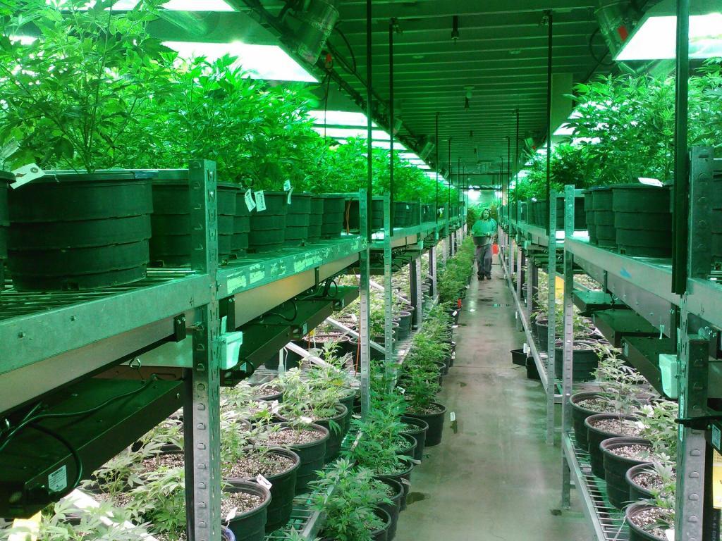 Greenhouse22.jpg
