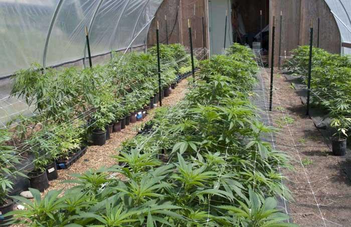 Greenhouse_Grow_-_AP.jpg