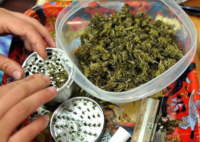 Grinding_Cannabis_Buds.jpg
