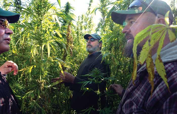Hemp_Farmers_in_Vermont_-_Trent_Campbell.jpg