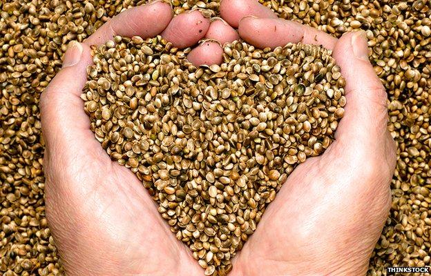 Hemp_Heart_Seeds.jpg