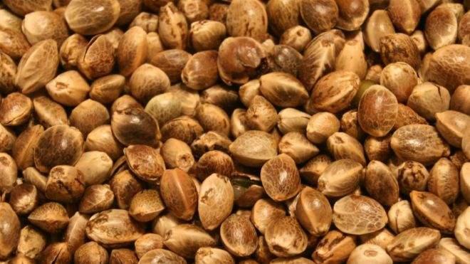 Hemp_Seeds3.JPG
