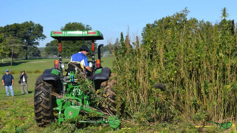 Hemp Strains May Be Legal In Kansas Future | 420 Magazine ®