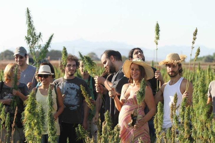 Hemp_pickers_in_Akaki_harvesting_the_crop.jpg