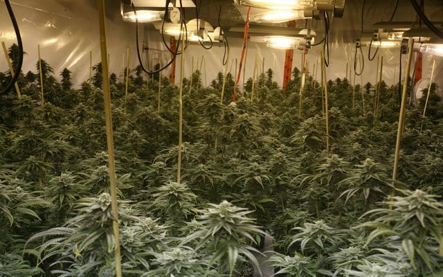 Oregon marijuana advocates planning international cannabis for Indoor gardening rainier oregon