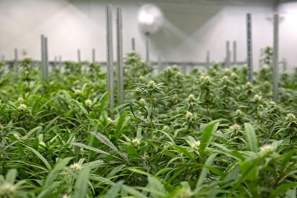 Indoor_Grow3_-_Getty_Images.jpg