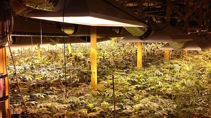 Indoor_grow2.jpg