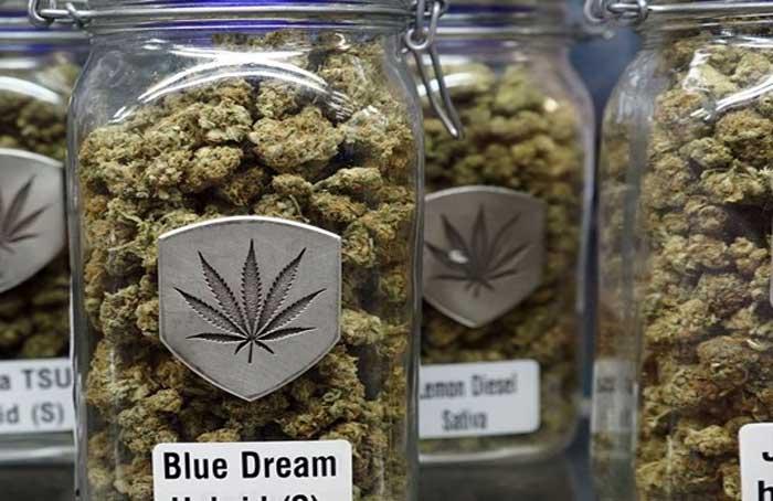 Jars_of_Blue_Dream_-_Kyle_Nelson.jpg