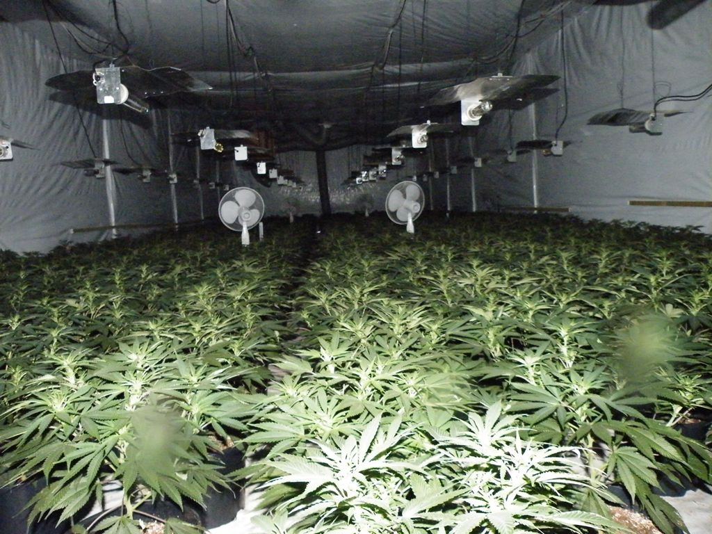 Large Scale Underground Cannabis Farm Found In Drakelow