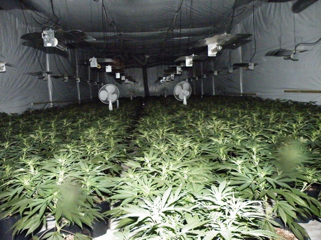 trove how to grow plants underground