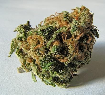 Macro_cannabis_bud1.jpg