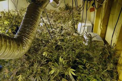 Marijuana_120511_01425x283.jpg