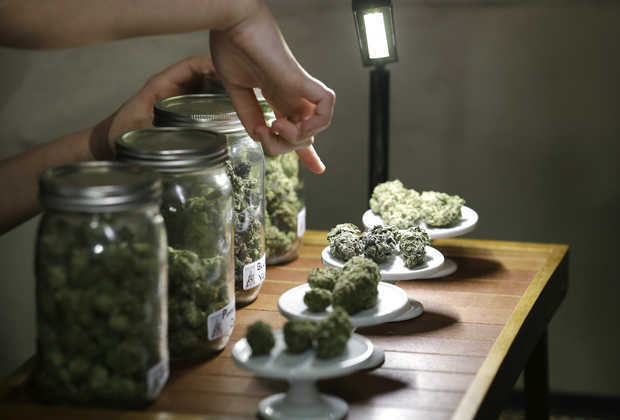 Medical_Cannabis_in_Jars2.jpeg