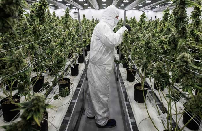 Warehouse_Grow2_-_Getty_Images.jpg