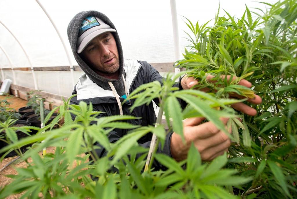 Weed_Grower_-_JOSH_EDELSON.jpg