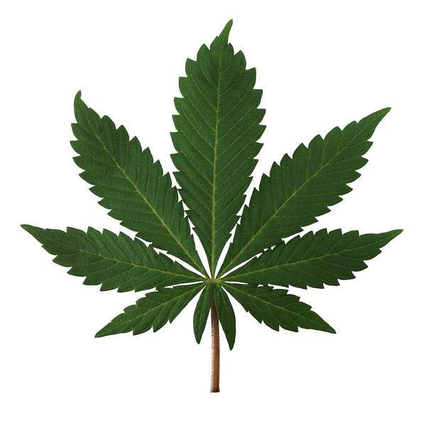 legalizing marijuana in the u s The memo informed us attorneys that, due to limited resources, the   prohibitions on cannabis in states that had legalized marijuana in some.