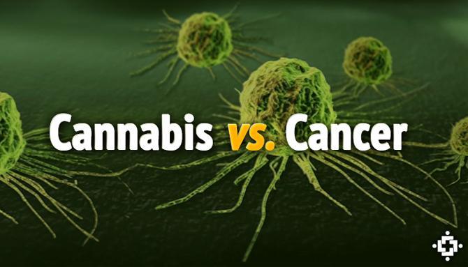 Marijuana Cures Cancer London Researchers Say Cannabis Is Key