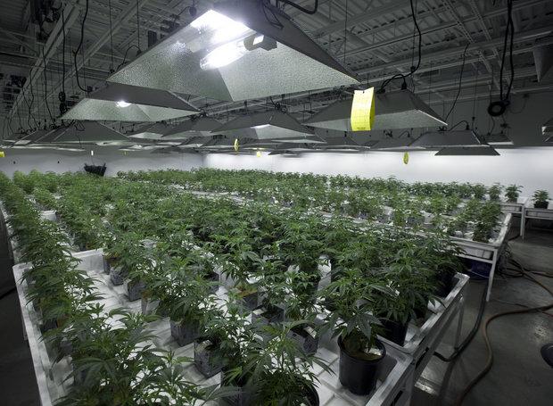 New Hampshire: Medical Marijuana Cultivation Center Gets