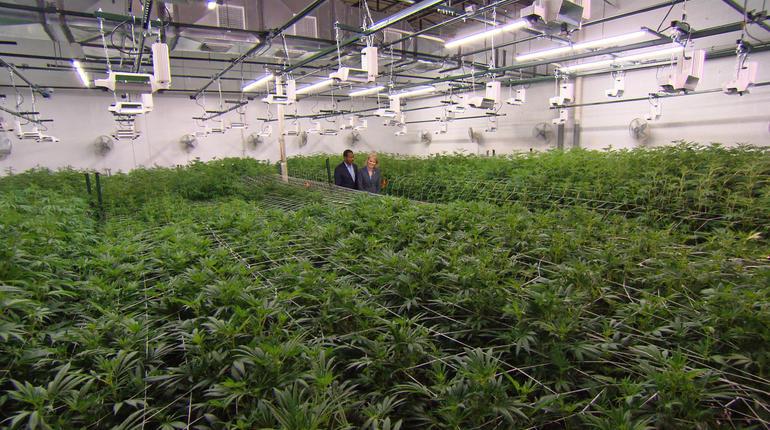 grow-room-at-mindful001.jpg