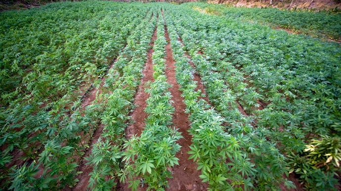kentucky-set-to-be-first-state-to-legalize-hemp-production.jpg