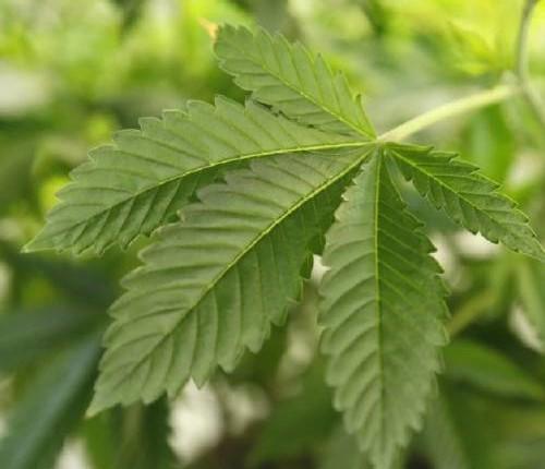 leaf77.jpg