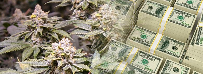 marijuana-money-taxes-cannabis-tax.jpg