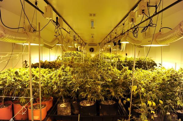 marijuana_indoor_grow.jpg