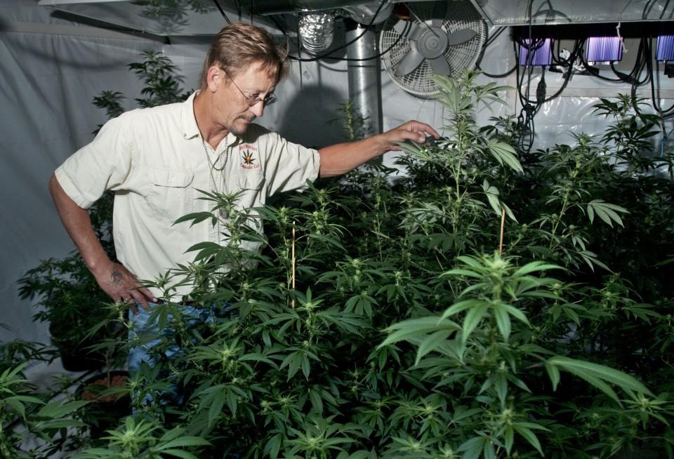 medical-marijuana-in-michigan-6204c73c8b5dc202.jpg