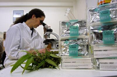 medical-marijuana-lab.jpg