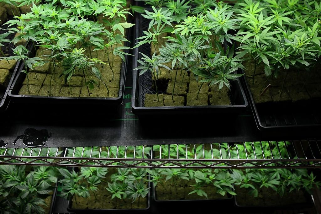 new_york_chronic_pain_medical_marijuana_-_Justin_Sullivan.jpg